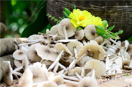 怎样识别野生菌是否有毒